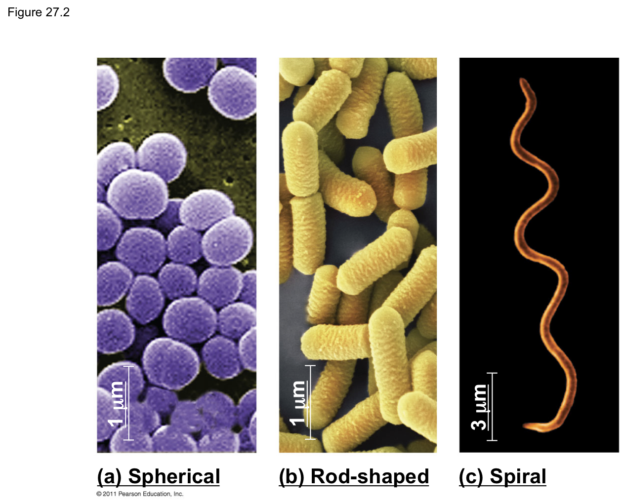 Germ clipart microscopic organism. Germs and bacteria lessons