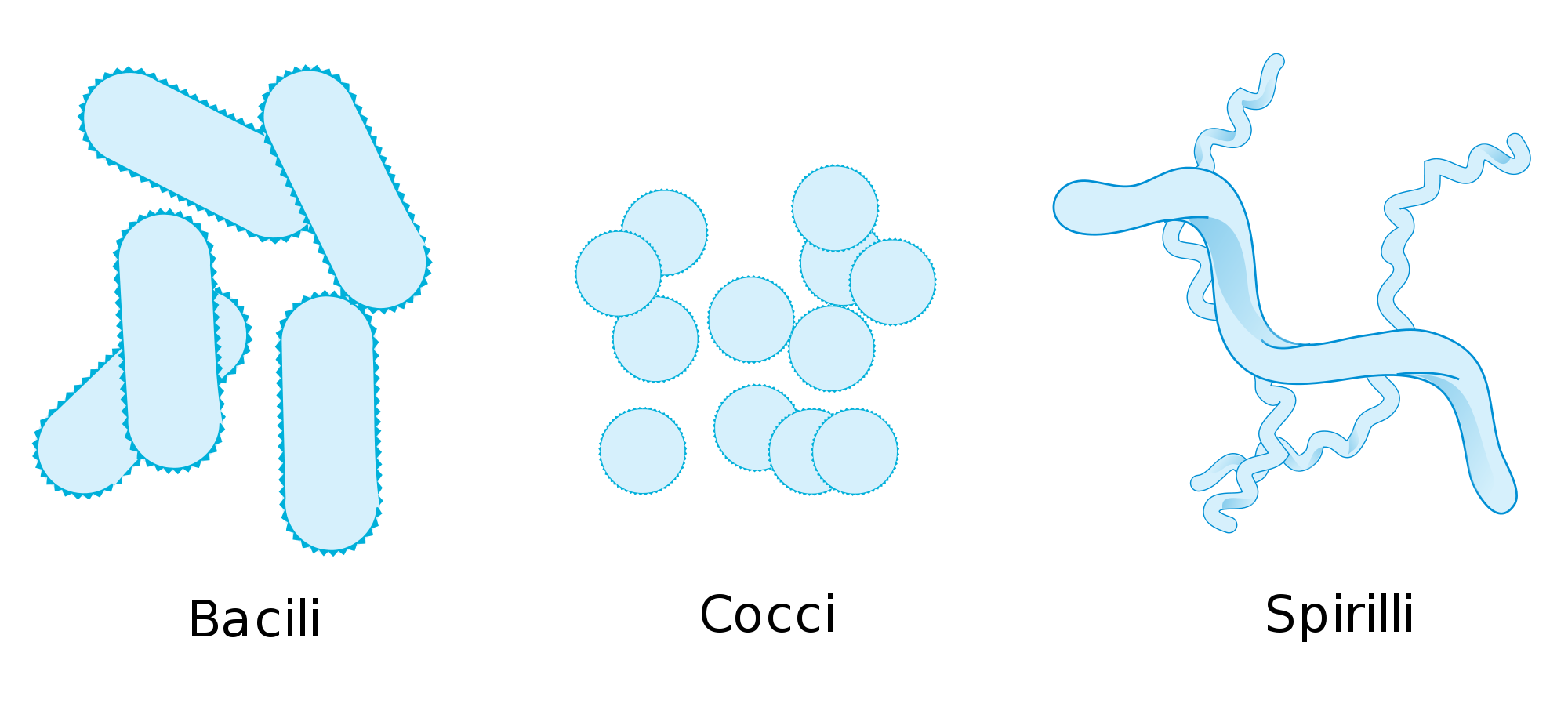 Germ clipart pathogen. Bacteria drawing at getdrawings