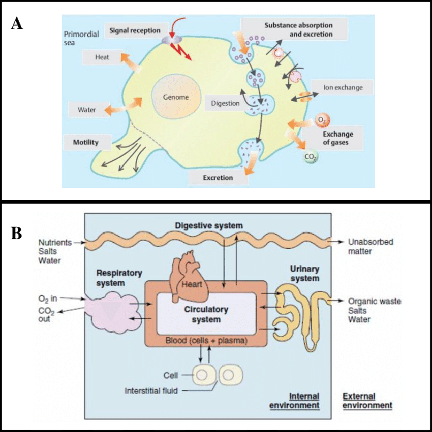 Germs clipart unicellular organism. Cellular communication and homeostasis