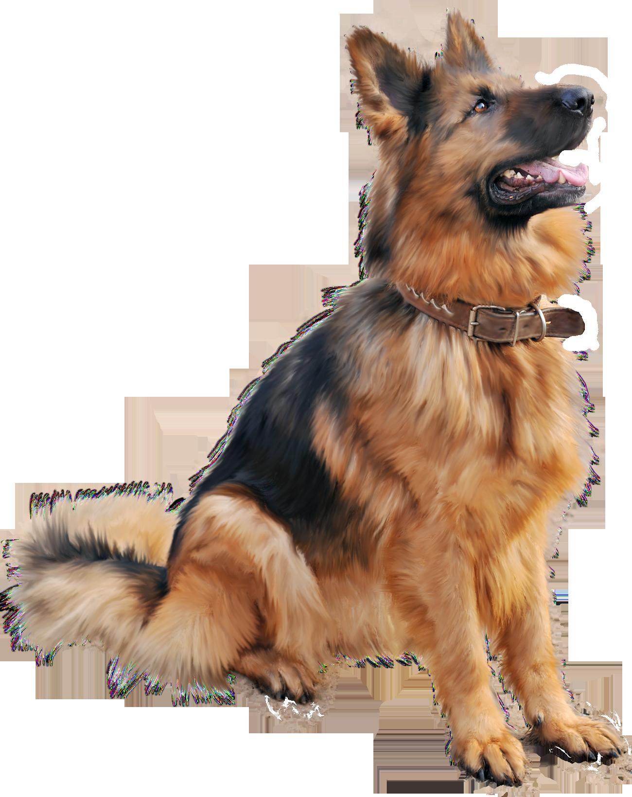 Shepherd dog sitting png. German clipart cute
