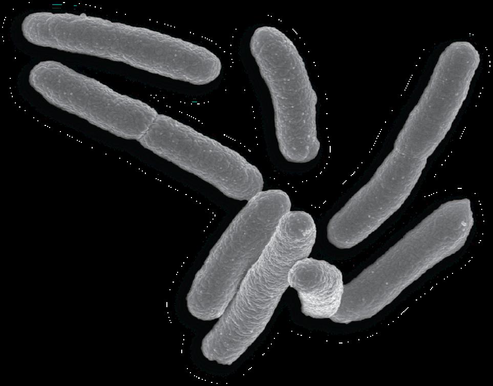 Jacobhoke spathogens on emaze. Germs clipart escherichia coli