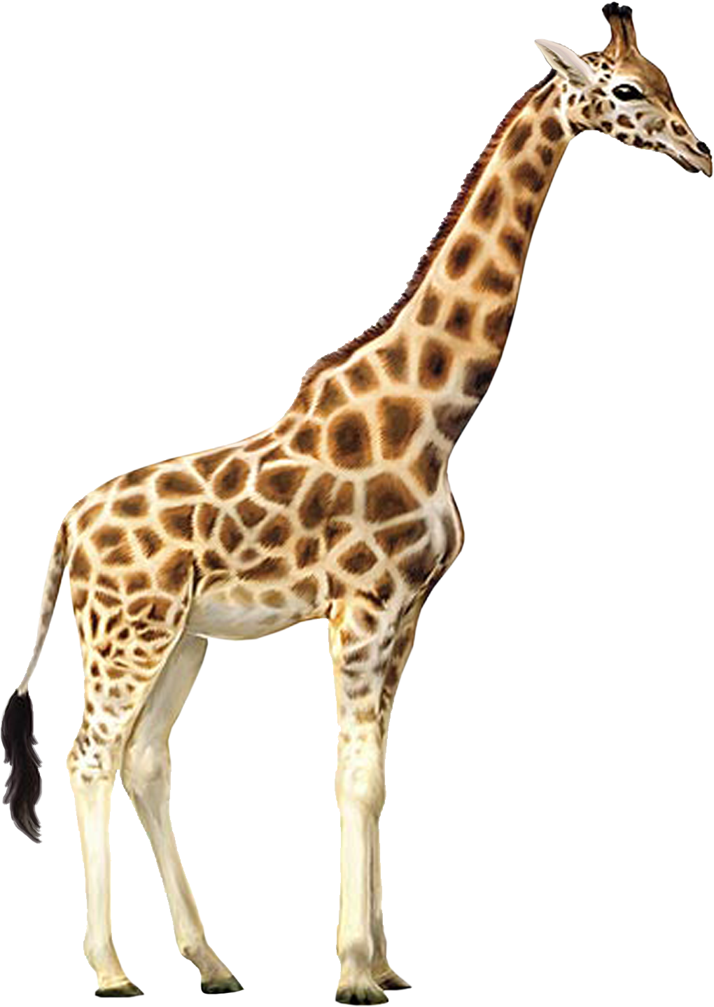 Giraffe clipart christmas. Realistic free collection download