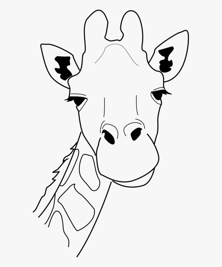 Giraffe clipart outline. Drawing of a head