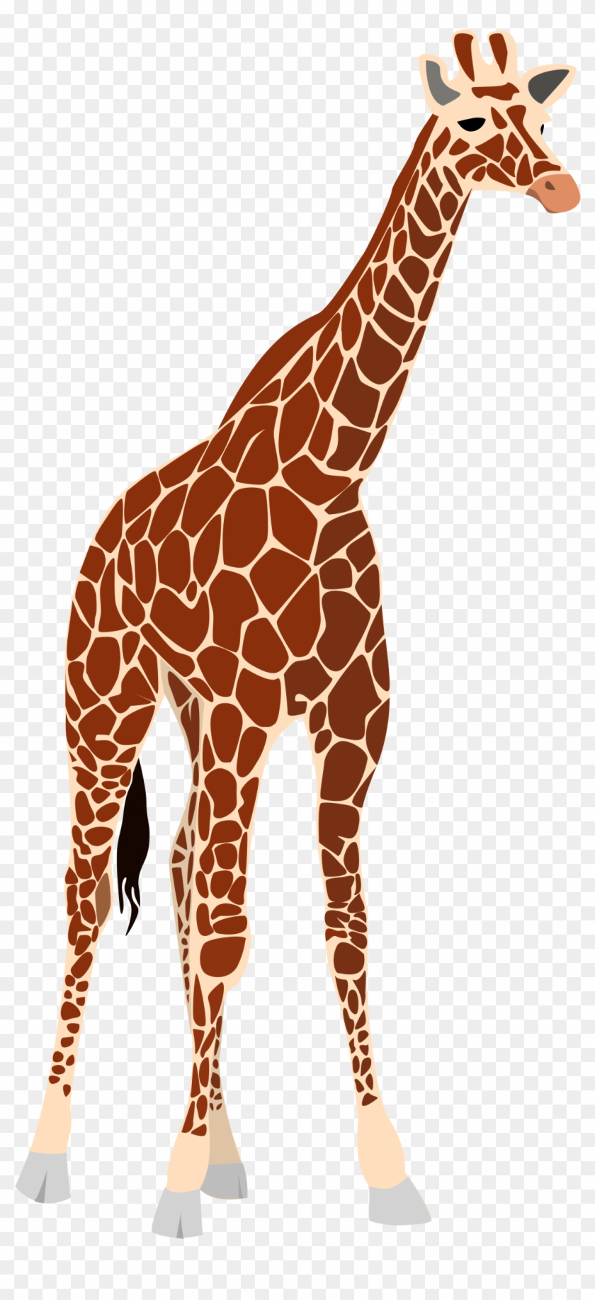 Giraffe clipart realistic.  png freeuse stock
