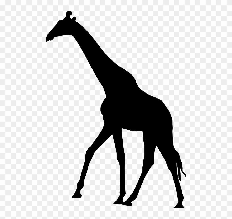 Pinclipart . Giraffe clipart silhouette