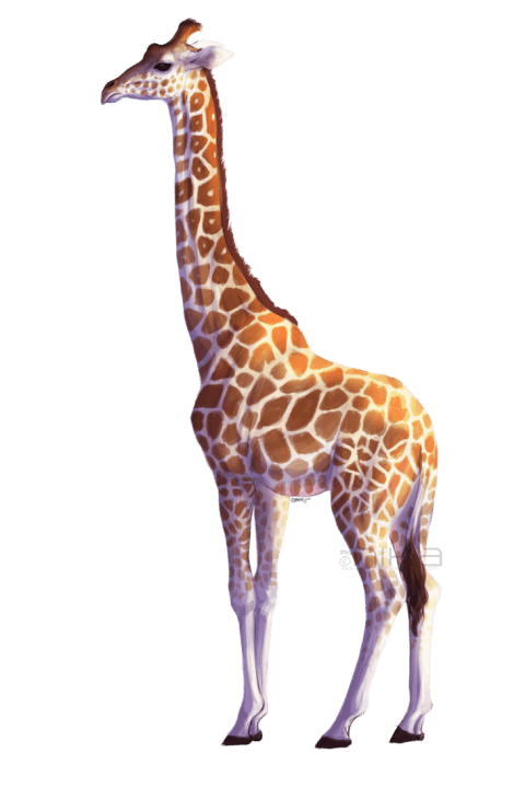 Png free images toppng. Giraffe clipart skin