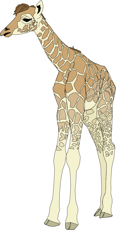 Baby medium image png. Giraffe clipart tail