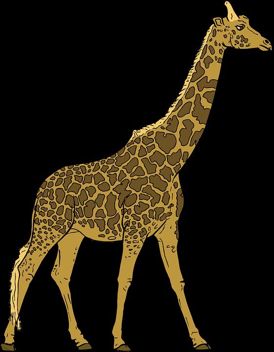 Baby shop of library. Giraffe clipart vector
