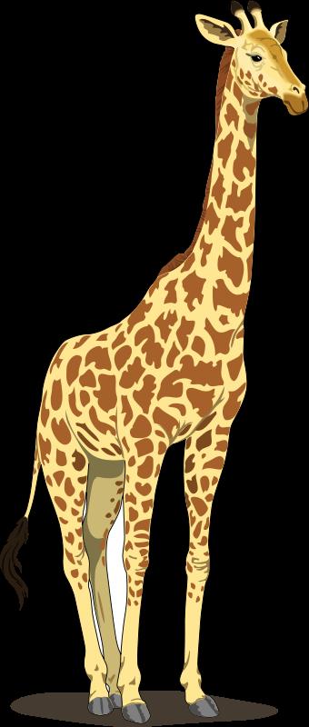 Giraffe clipart vector. Free image clip art