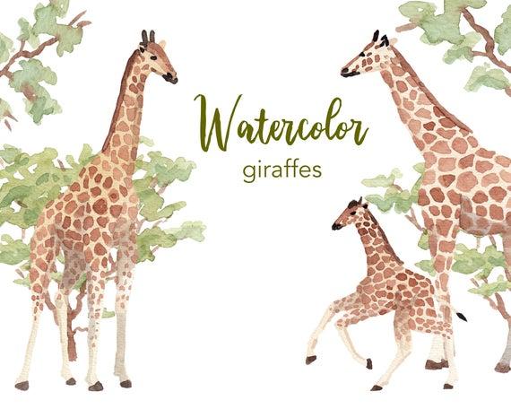 Giraffe clipart watercolor. Watercolour set commercial use