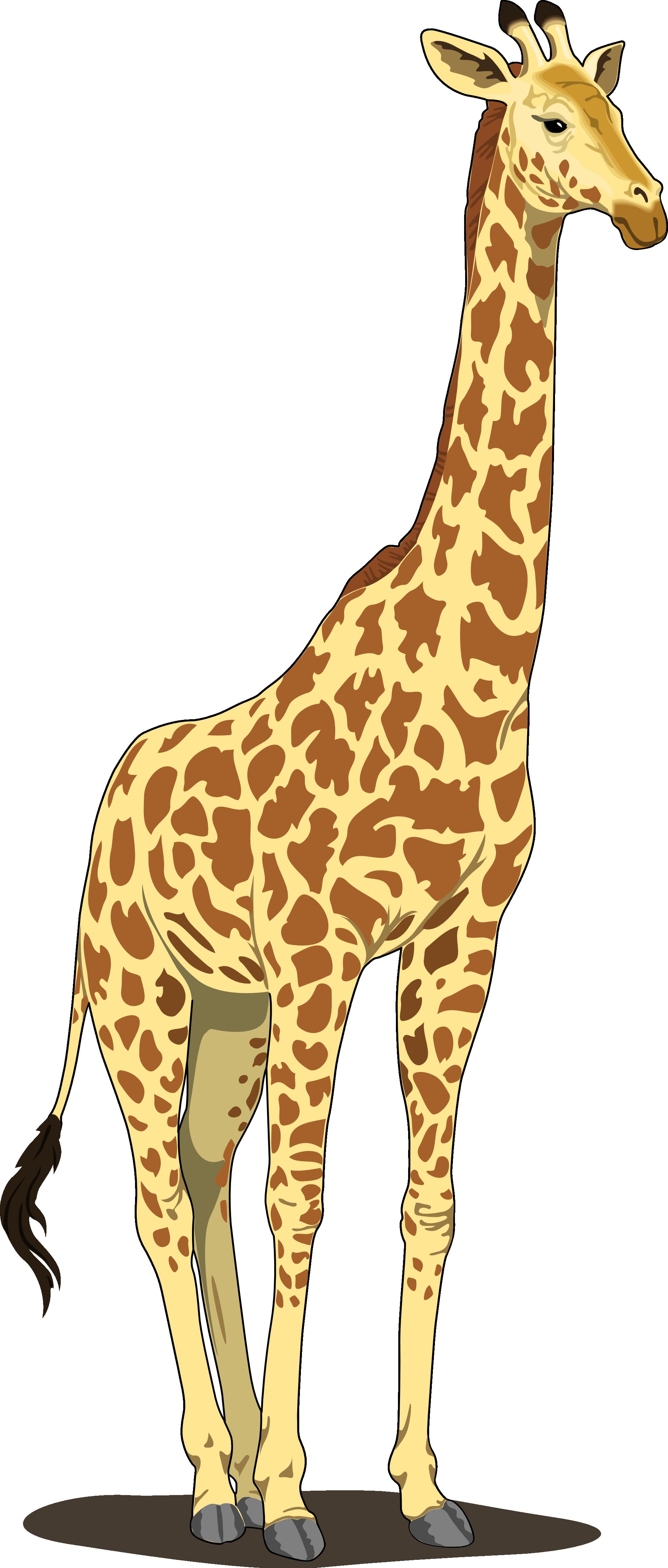 Giraffe clipart zarafa. Animal