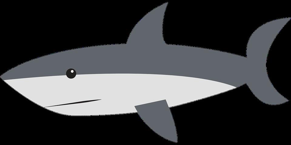 Great white shop of. Girl clipart shark