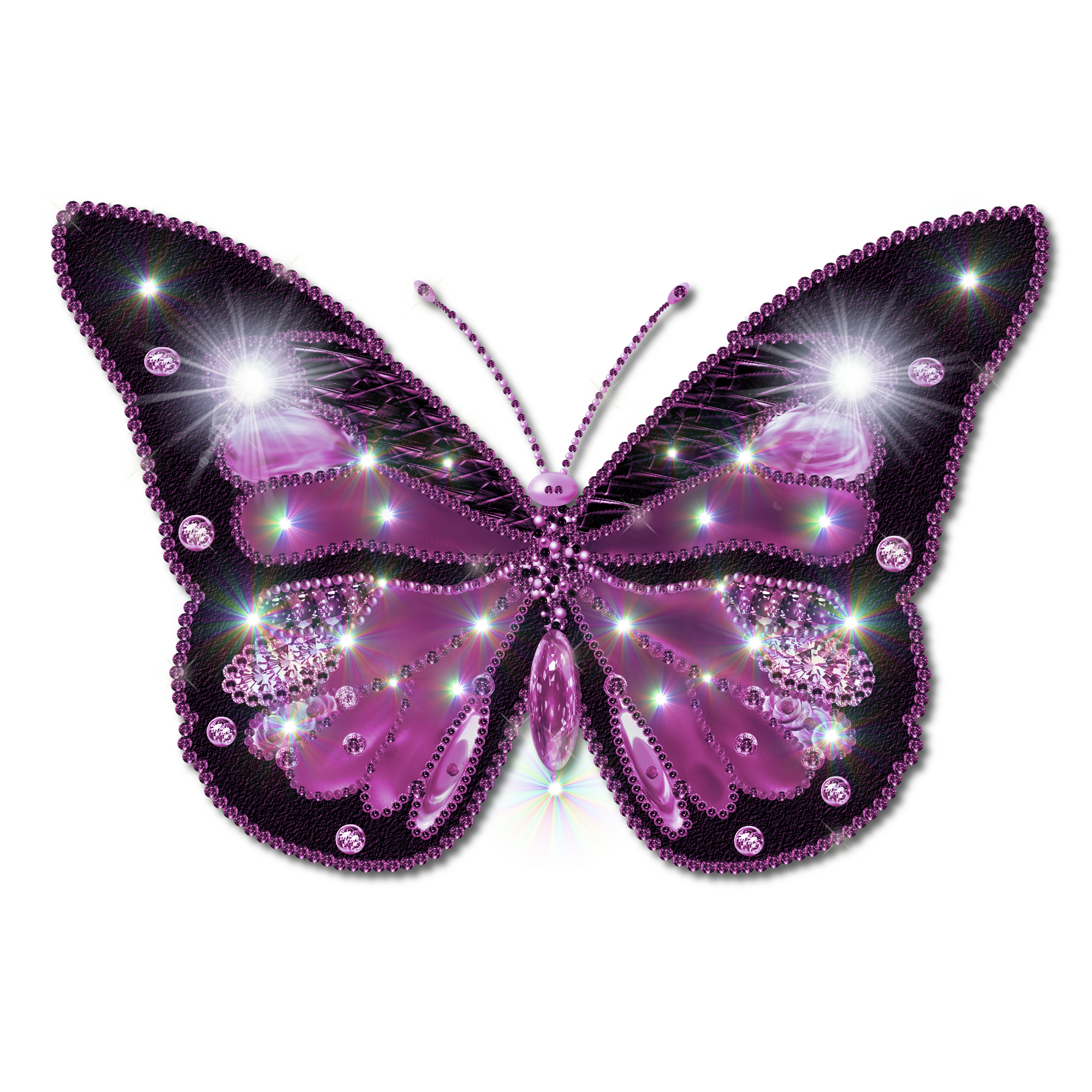Butterfly vector png. Pictures clipart free icons