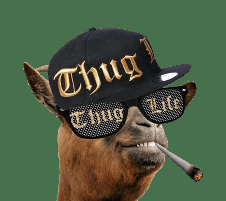 Life llama transparent png. Glasses clipart thug