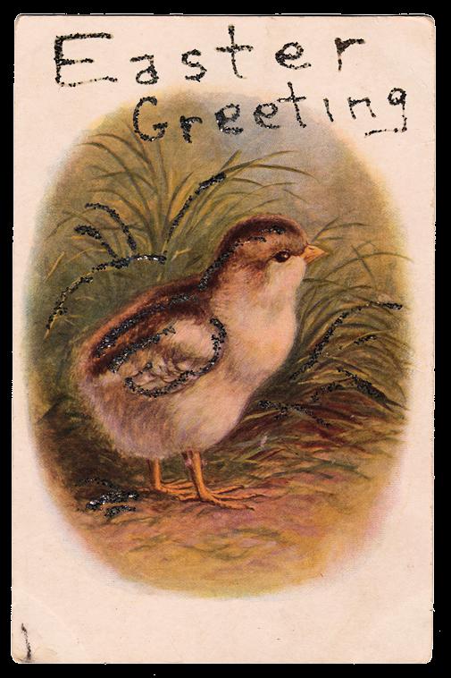 Peeps bird