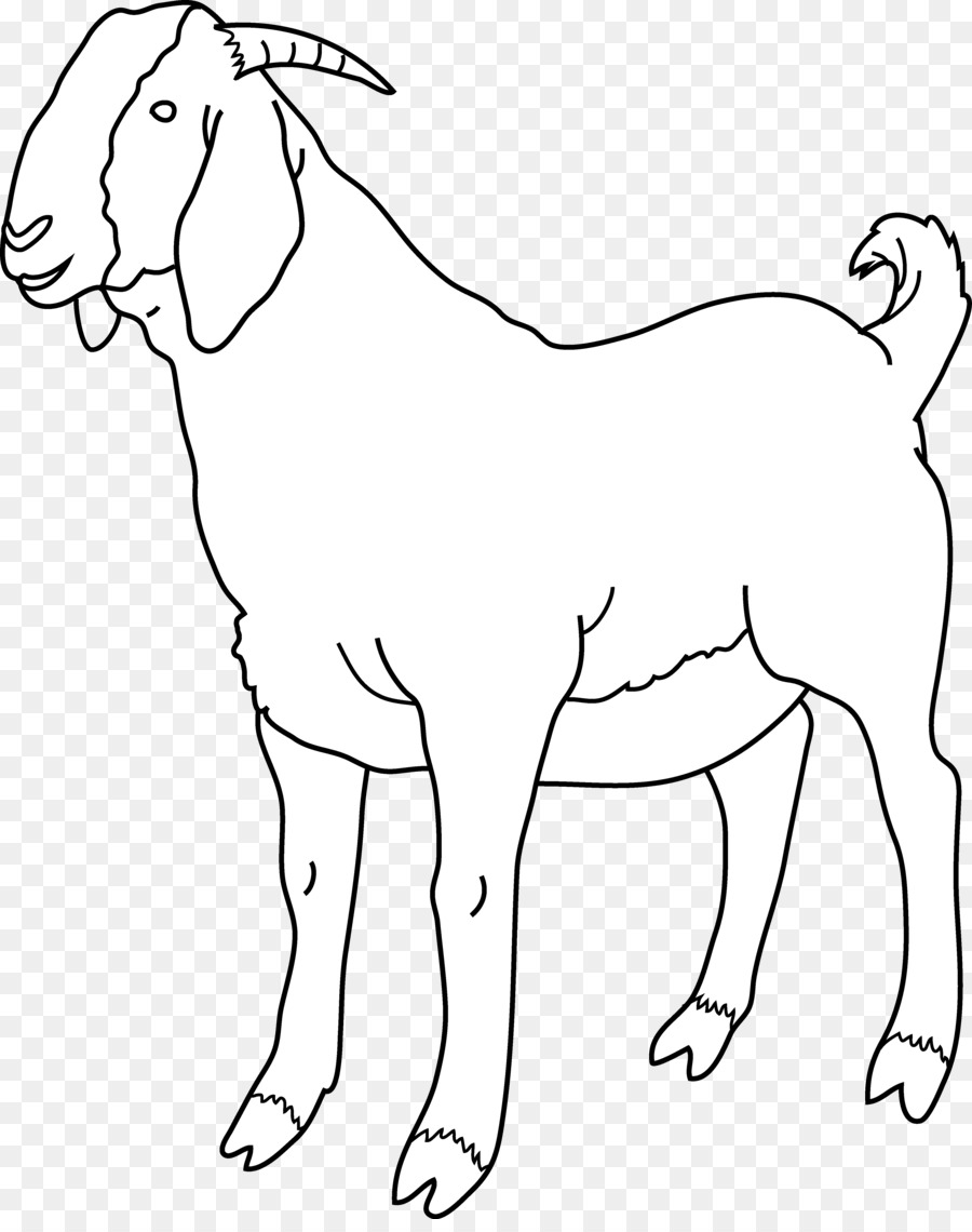 Boer black bengal sheep. Goat clipart