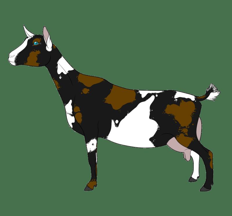 Goat clipart baby goat. Nigerian dwarf gallery by