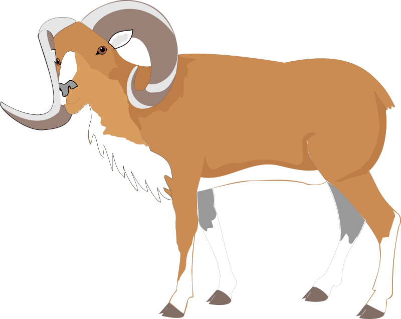 Goat clipart big goat. Bighorn animal pictures royalty