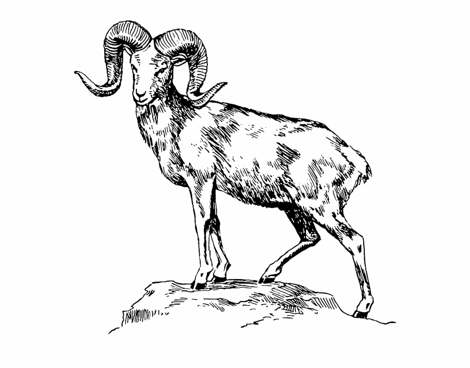 Goat clipart black and white. Mountain transparent png