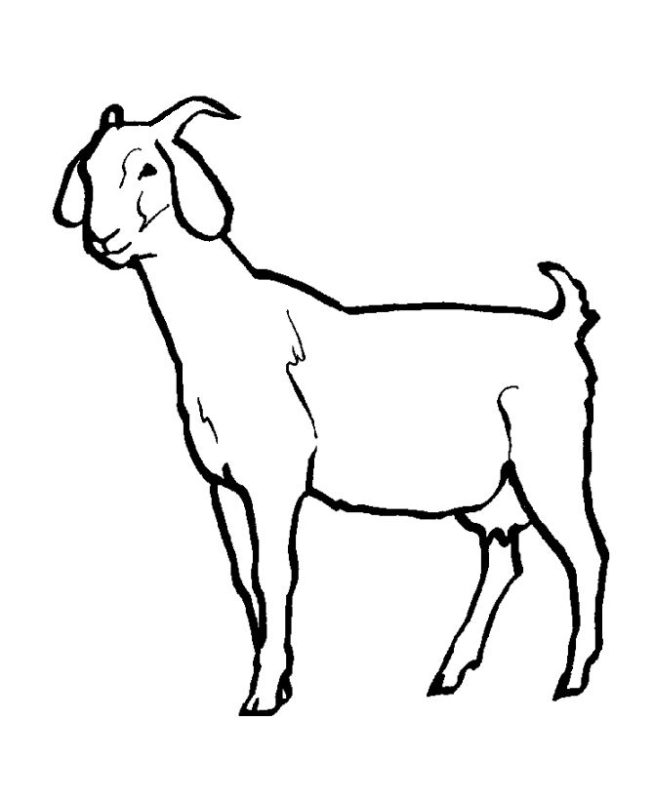 goat clipart easy draw
