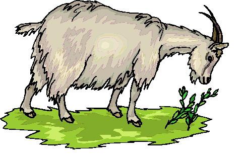 Free cliparts download clip. Goat clipart goat farming