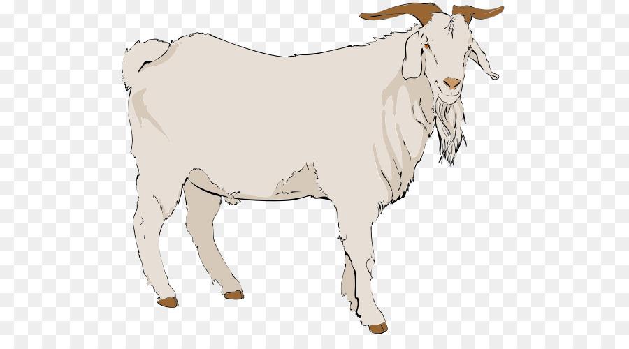 Goat clipart kiko goat. Sheep cartoon png download