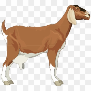 Free png images transparent. Goat clipart male goat