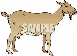 Royalty free picture . Goat clipart nanny goat