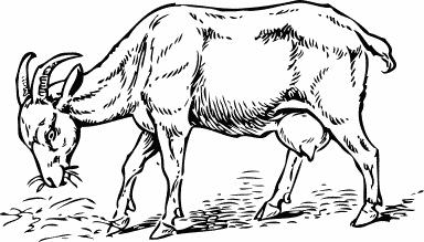 Goat clipart nanny goat. Free clip art image