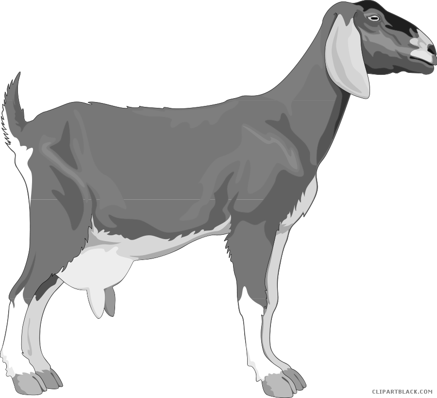 Goat clipart old goat. Page of clipartblack com