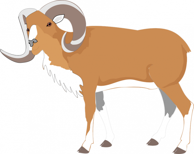 Goat clipart printable. Nice coloring pages for