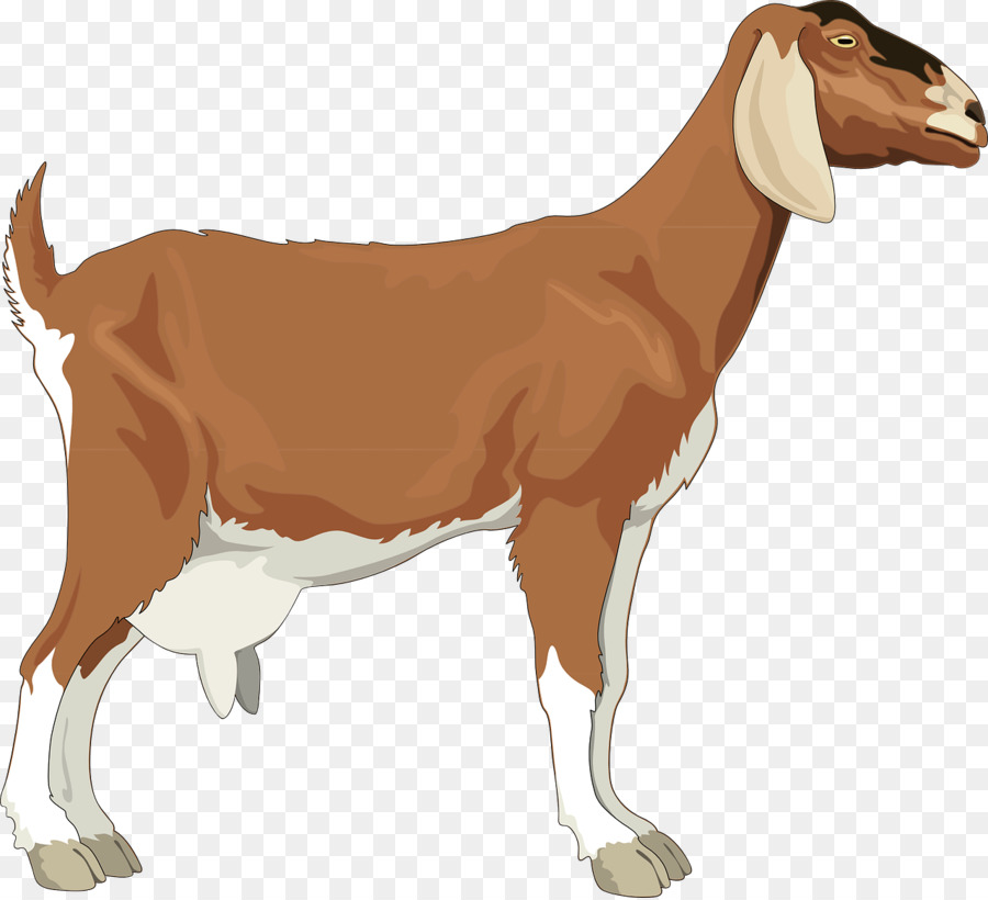 Cartoon png download free. Goat clipart she goat
