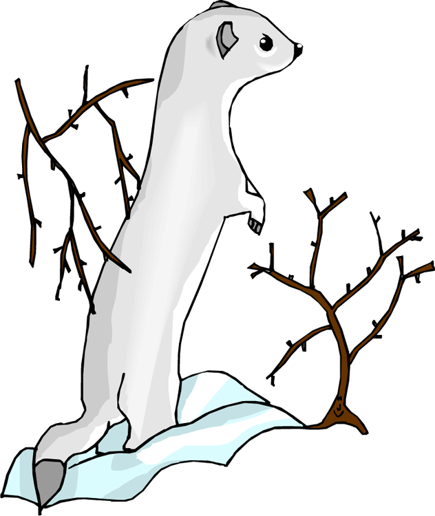 Free otter white with. Goat clipart short tail