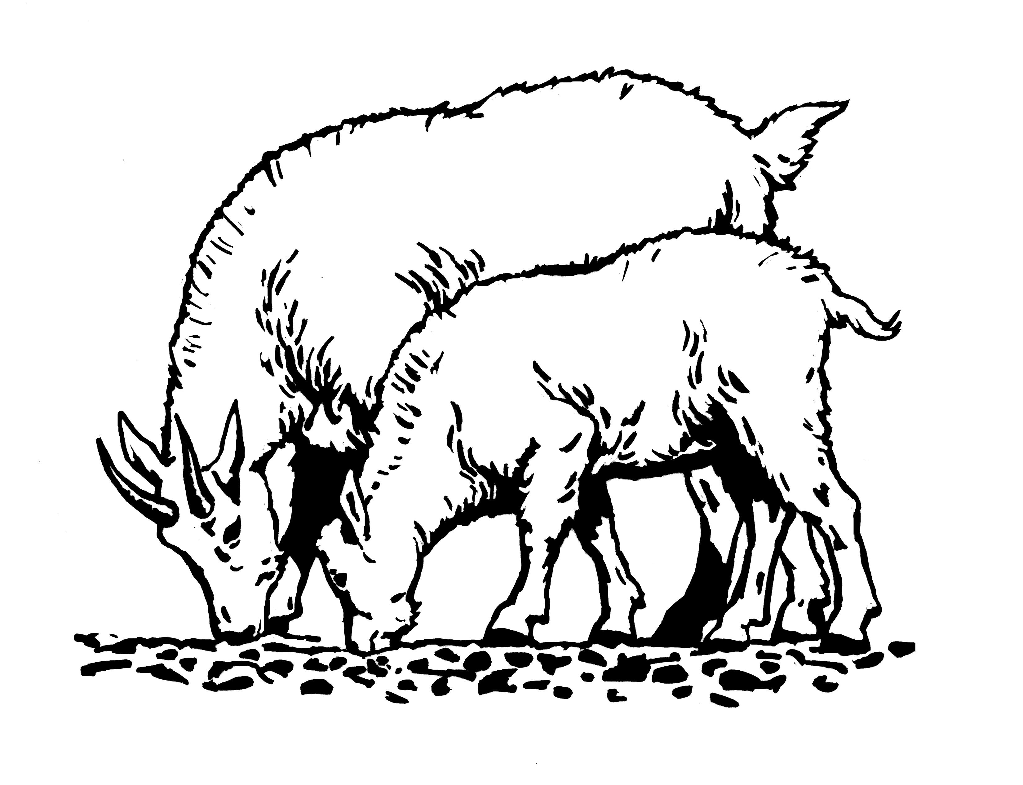 Goat clipart two goat. Free cliparts download clip