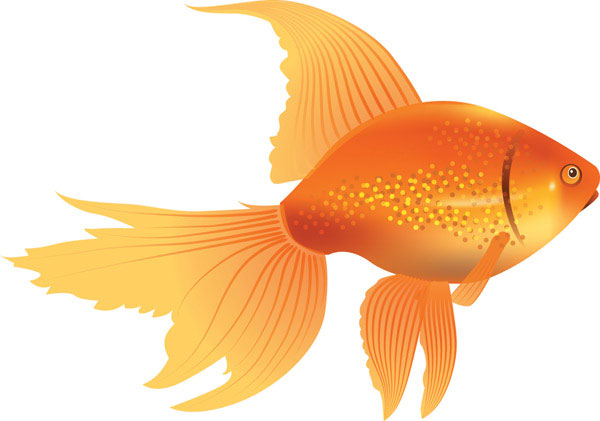 Goldfish clipart. Free cliparts download clip