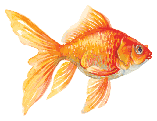 Goldfish clipart. The arts image pbs