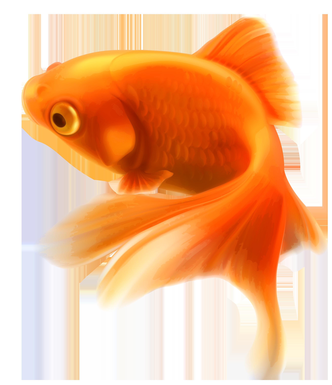 Goldfish clipart 2 fish. Aquarium tropical png download