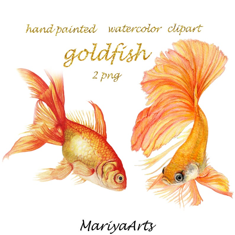 Watercolor hand painted clip. Goldfish clipart 2 fish