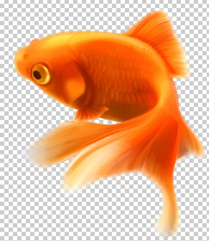 Goldfish clipart 5 fish. Aquarium tropical png animal
