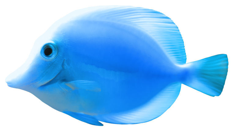Clip art transprent png. Goldfish clipart basic fish