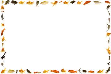 Goldfish clipart border. Buy this stock photo