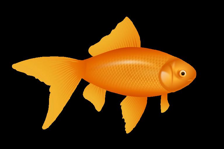 Free auksin uvel keistutis. Goldfish clipart border