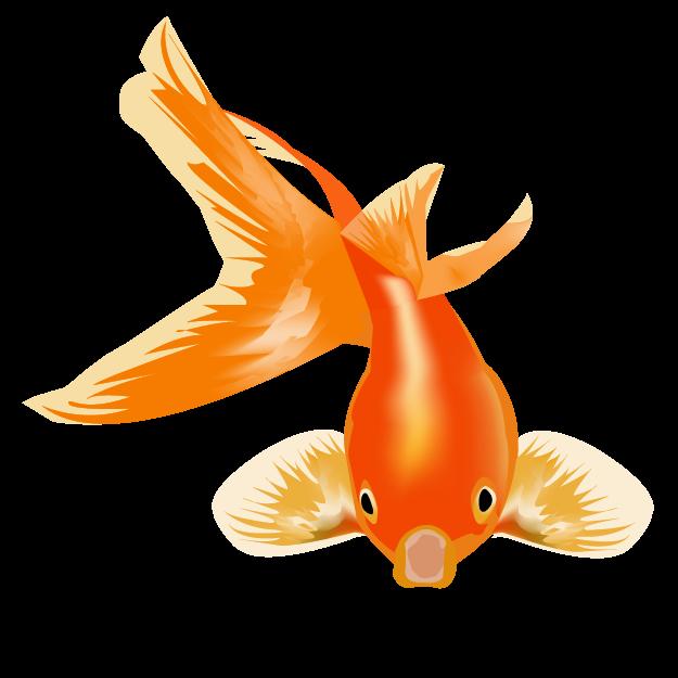 Goldfish clipart colorful fish. And betta mr fatta