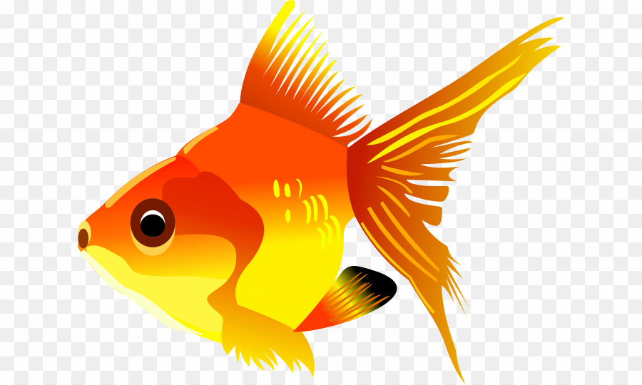 Goldfish clipart coral reef fish. Images free png download