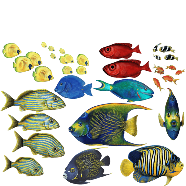 Goldfish clipart coral reef fish. Tropical wall stickers combo
