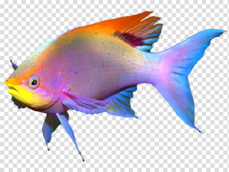 Goldfish clipart coral reef fish. Transparent background png