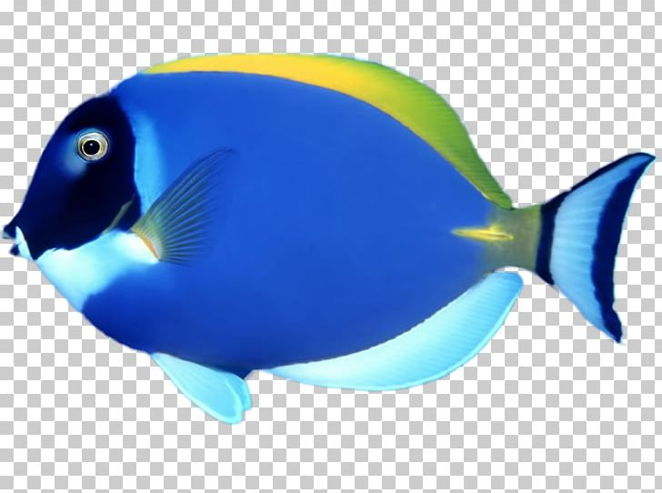 Goldfish clipart coral reef fish. Chomp tropical png