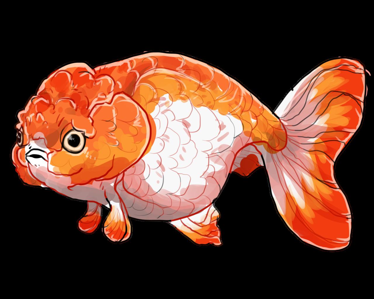 Goldfish clipart dead goldfish. Its canon folks