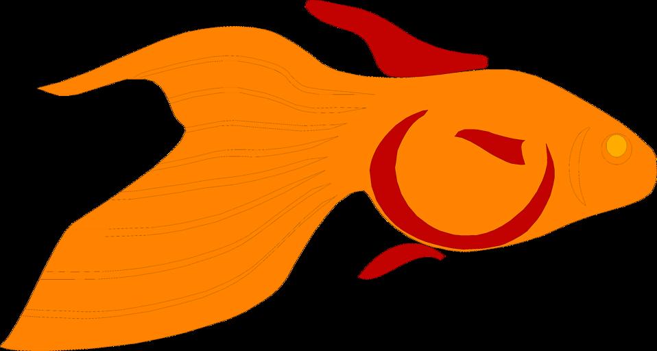 Goldfish clipart file. Free stock photo illustration