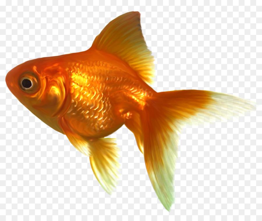 Fish cartoon illustration orange. Goldfish clipart fisg